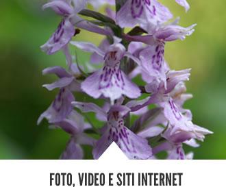 multimedia01